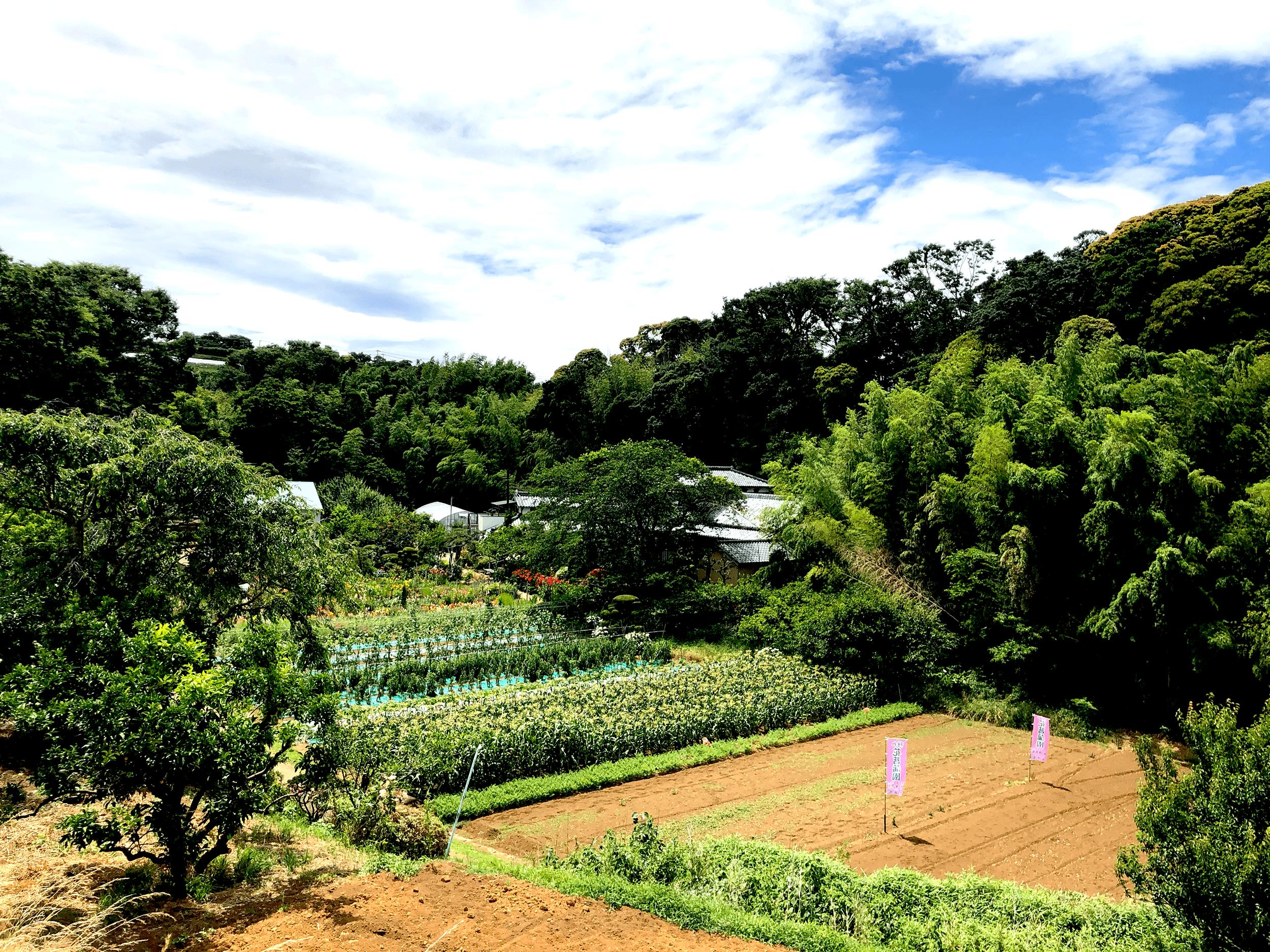 ザ・作兵衛 / 石井みかん園