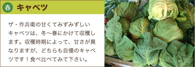 bnar_cabbage