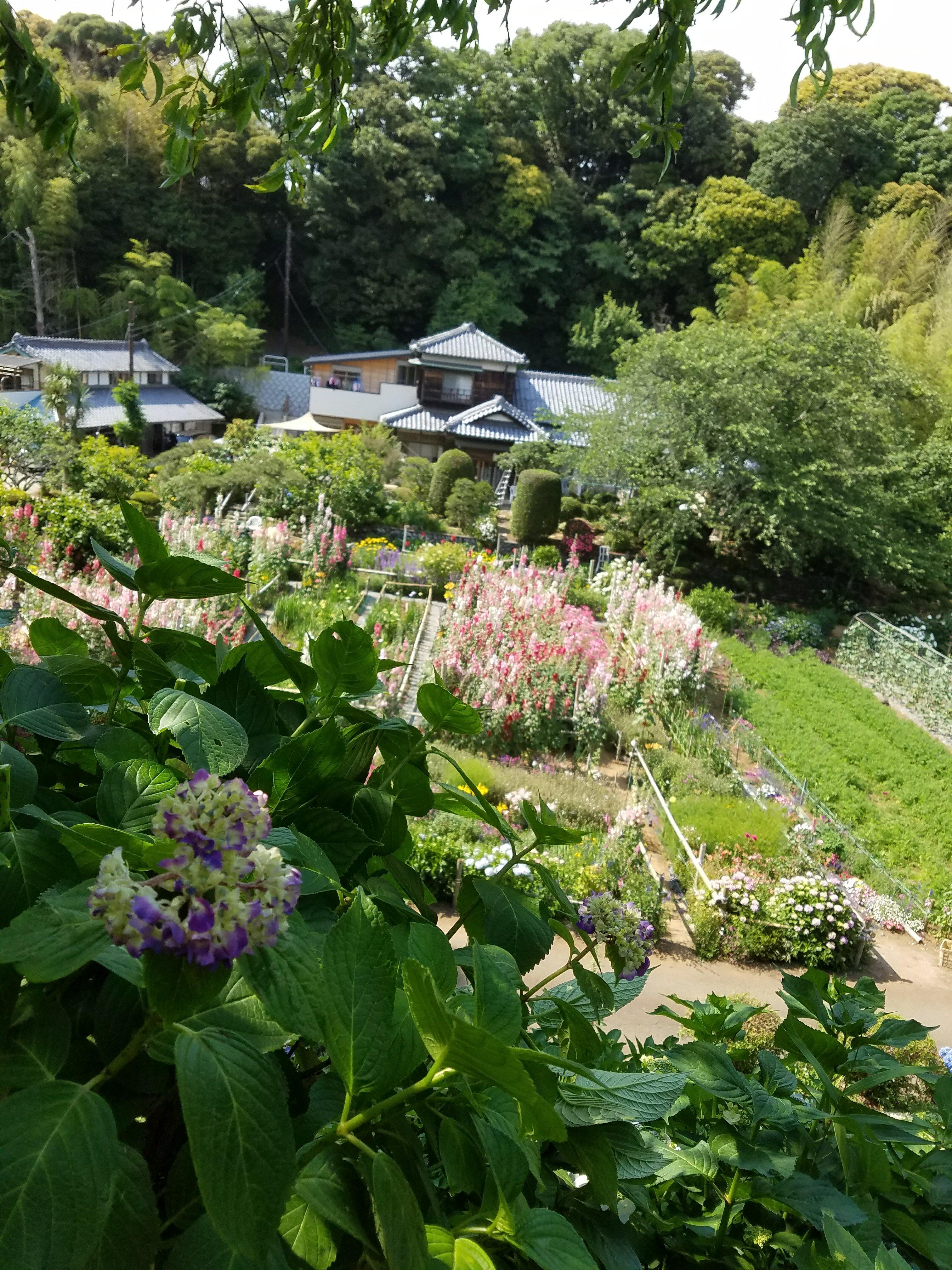 隠れ花菖蒲園